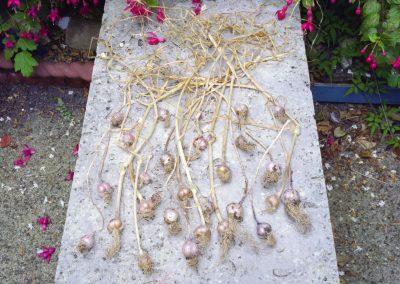 Eddie's Garlic