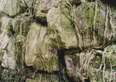 roots-copy
