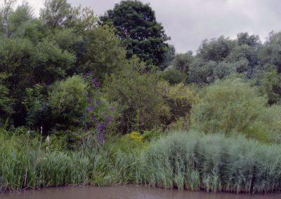 vegetation-1-copy-2