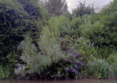 vegetation-3-copy-2